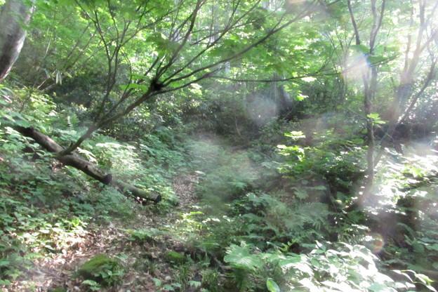 写真: 0758amx124