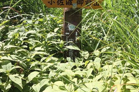180823小佐波御前山 1