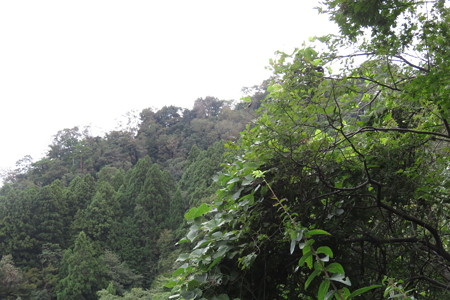 180918城ヶ平山 3完