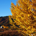 Photos: 01黄色い木と赤い山