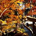 Photos: 石山寺境内上から_05