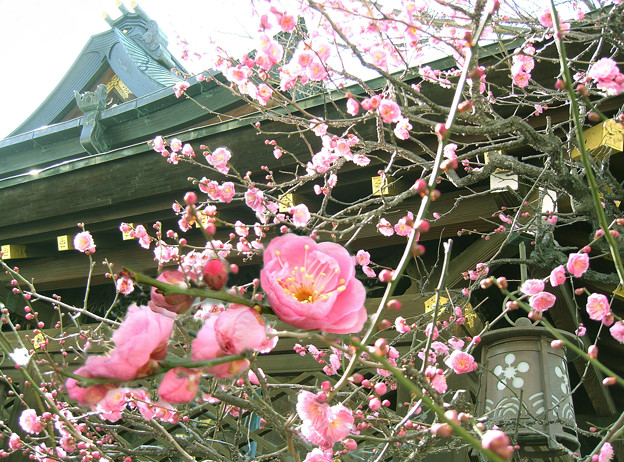 写真: 大阪・天満宮