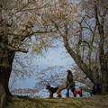 Photos: 背割堤の春