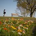 Photos: 春の万博花の丘