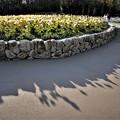 Photos: 午後の花の丘