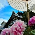 Photos: 當麻寺のボタン