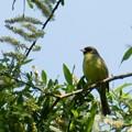北海道の鳥2