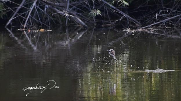 燕の水飲み