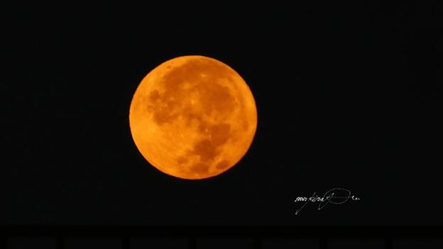 オレンジ色お月さん