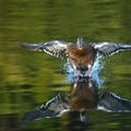 Photos: 怪鳥