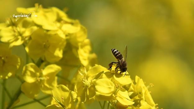 Photos: 黄色い世界