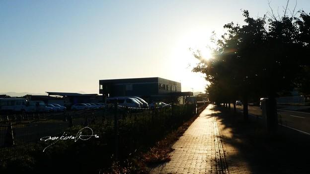 朝陽の当たる歩道