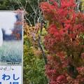 Photos: 猿も紅葉が好き?