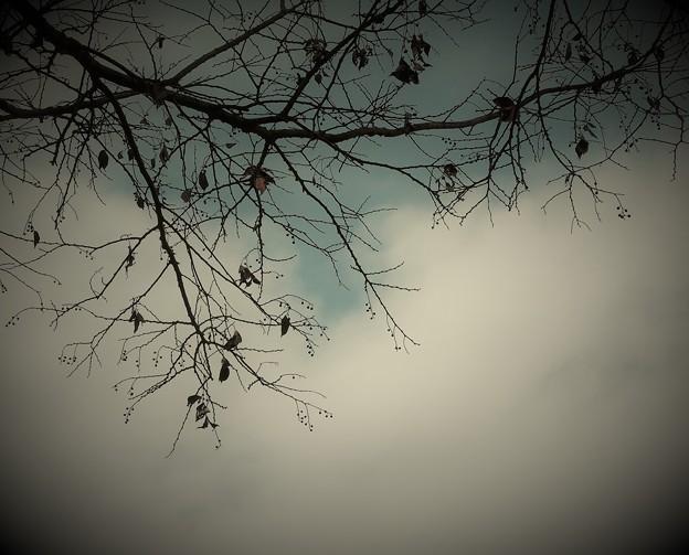 写真: 冬枯れて
