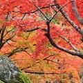 京都・紅葉散策[嵐山・宝厳院]