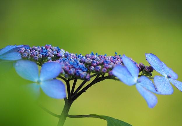 Photos: 額の花