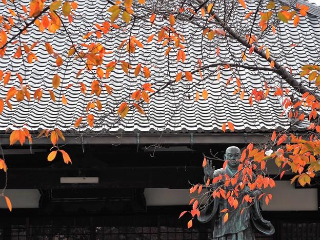 染まるいい色[京都・墨染寺]