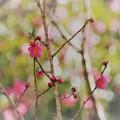 Photos: 春淡し