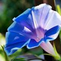 写真: 朝の花