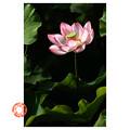 写真: 4日目の花