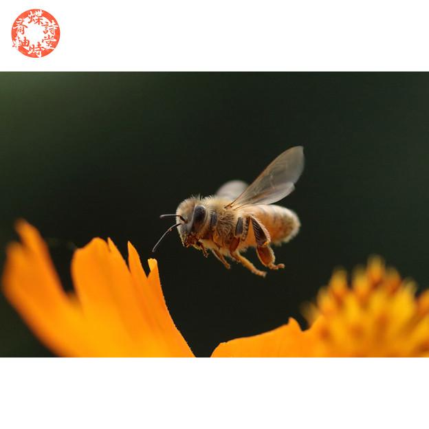 September Honey