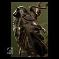 Photos: 蝉という生き方