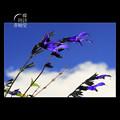 Photos: 飛びたかった空の色