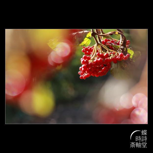 赤い実の輝き