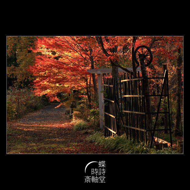 Photos: 晩秋の小径