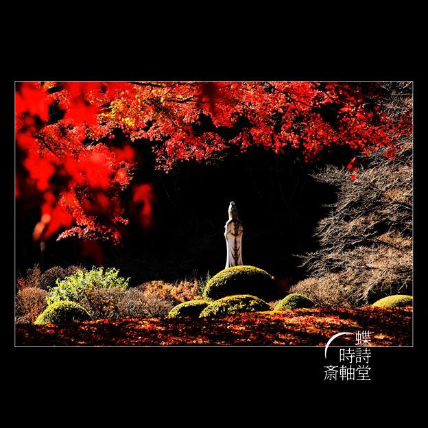 Photos: 菩提を求めて