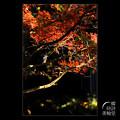 Photos: 赤と翠