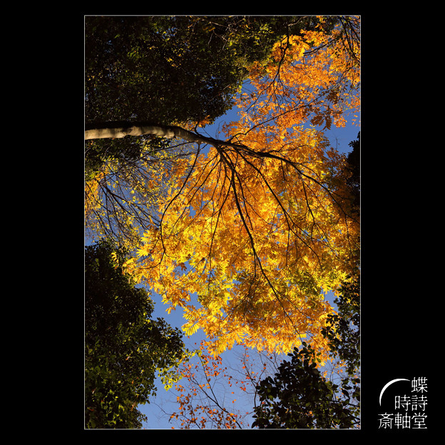 樹木たちののディスタンス