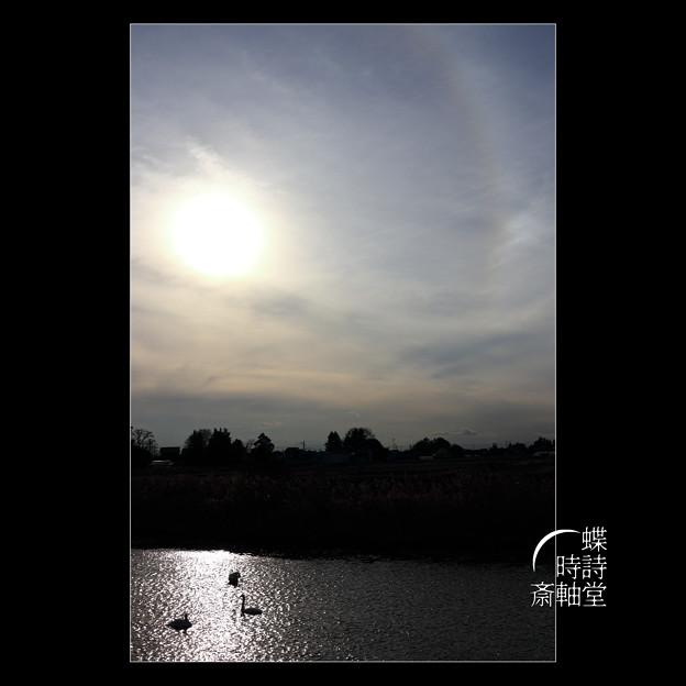 白鳥と日暈と幻日と