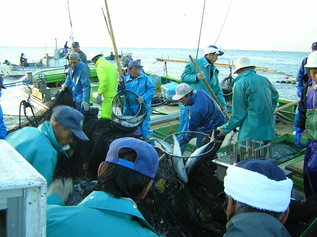 梶賀大敷200411 (8)