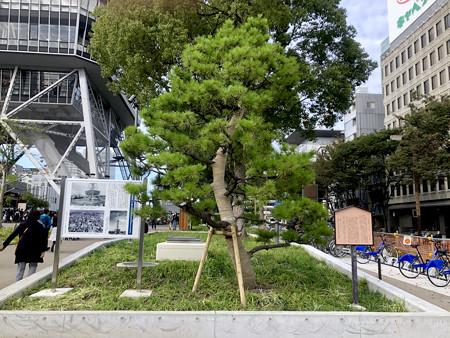 リニューアル直後で賑わう久屋大通公園 - 35:小袖懸けの松