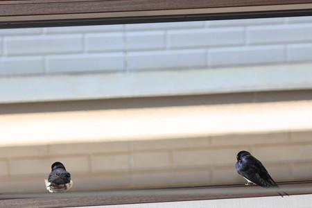 外を見てるご夫婦