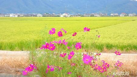 田園風景NO.1