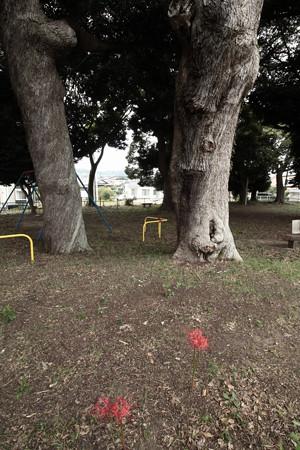 870 諏訪森公園